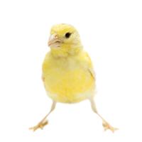 Haus- und Singvogel